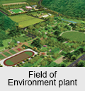 Field of Enviromnent plant
